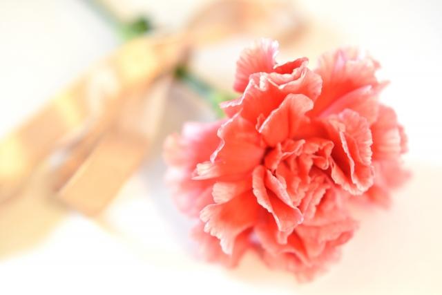 大切にしたい母の日、プレゼントの選び方は?